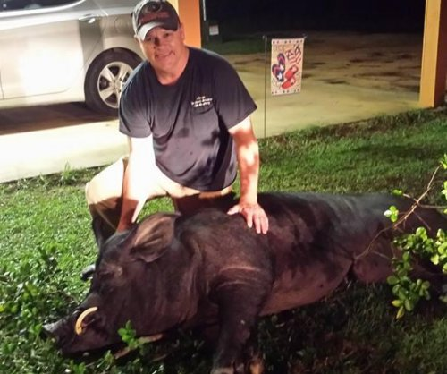 Alabama man shoots 820-pound 'wild' hog in front yard