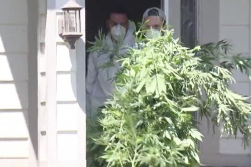 'Asian Pride' pot bust largest in Colorado history