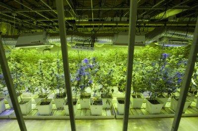 Justice Clarence Thomas says federal marijuana laws may no longer be needed