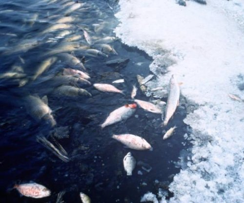 Mass die-offs among fish, birds and invertebrates on the rise