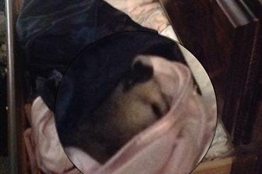 Alabama woman finds opossums sleeping in her drawers