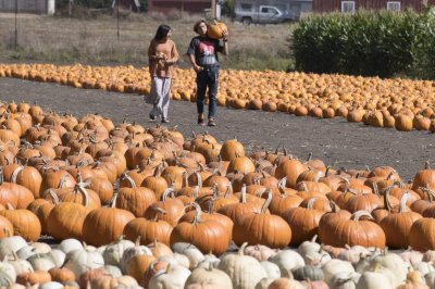 Pumpkin farmers report bumper crops for pandemic-weary customers