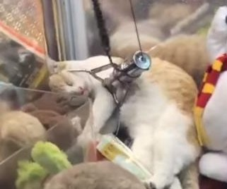 Claw machine players find real cat taking a nap inside