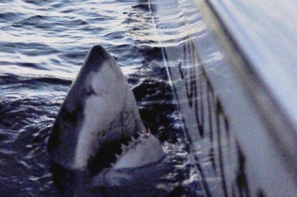 Shark Week 3 2 Headed Shark Attack 2012 - Hot Girls Wallpaper