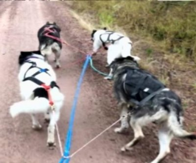 Sled dog team leads Montana police on slow-speed chase