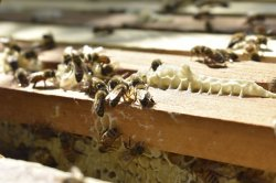 Man killed by multiple bee stings from 100-pound beehive, others injured