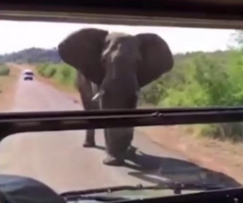Arnold Schwarzenegger chased by a elephant while on safari