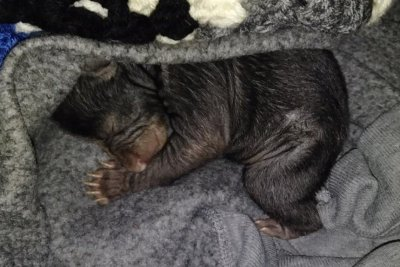 Box containing two newborn bear cubs left at N.C. man's house
