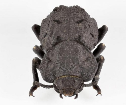 Scientists detail structural secrets of near-indestructible beetle
