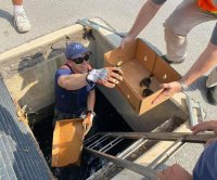 Florida firefighters rescue ducklings from storm drain