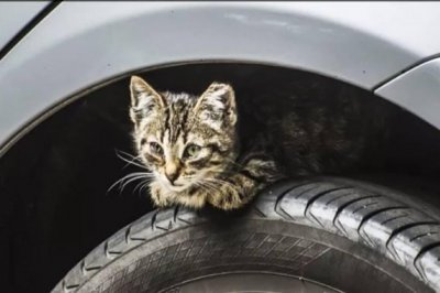 Kitten survives 17-mile drive in engine compartment