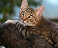 Cat rescued after 18 days stuck in Arkansas tree