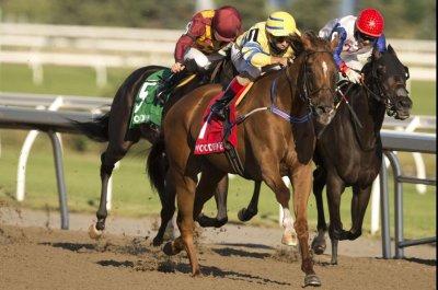 Maximum Security, Enable, Sistercharlie headline weekend horse racing