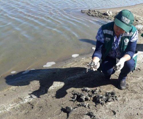10,000 endangered Titicaca water frogs found dead in Peru