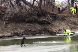 Dog rescued from floating ice on North Dakota river