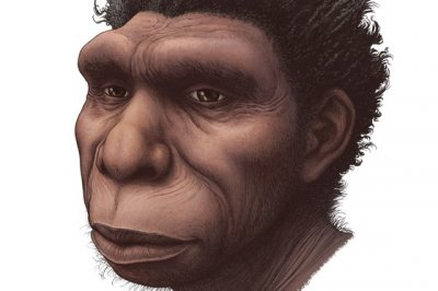 Newly named species of early human could help explain evolutionary gaps
