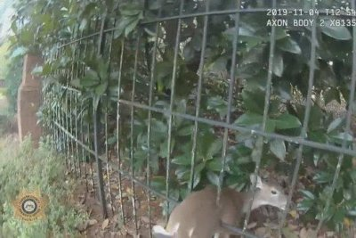 Georgia deputy rescues deer stuck between fence bars