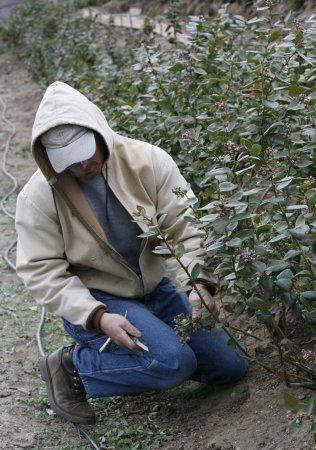 Consumer Corner: Organics gain clout in export markets
