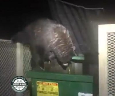 Deputies rescue bear cubs trapped in Colorado dumpster