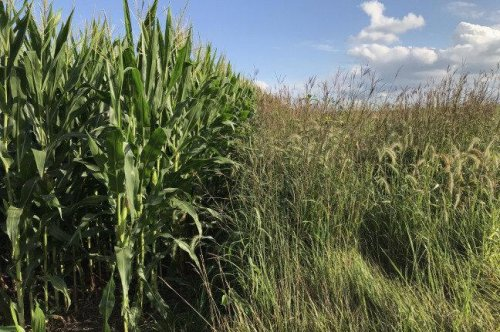 Study: Cover crops boost water quality, fail to increase carbon storage
