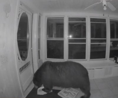 Bear opens front door, goes into house to look for pizza