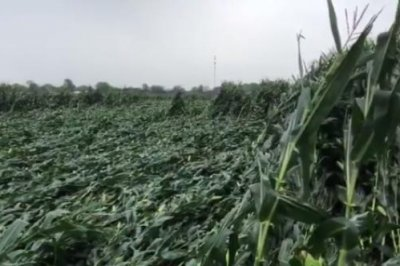 Smaller corn, soybean yields expected as wet weather persists in Midwest