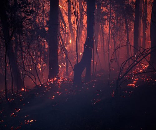Australia's wildfires burned 21 percent of the country's temperate forests