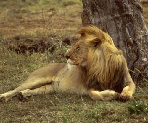 Zimbabwe calls for extradition of dentist who killed Cecil the lion