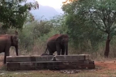 Elephants rescue calf from water tank in India