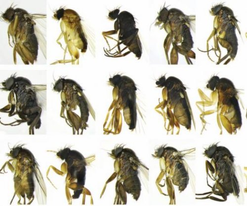 Biodiversity survey in LA turns up 30 new species of flies