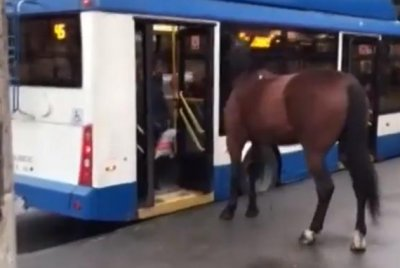 Loose horse attempts to board bus at Russian stop