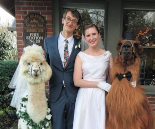 Service provides dapper llamas as wedding guests