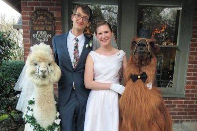 Service provides dapper llamas as wedding guests