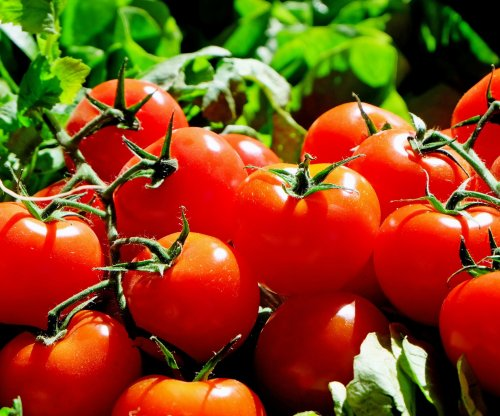 New U.S.-Mexico deal avoids tariffs on tomatoes