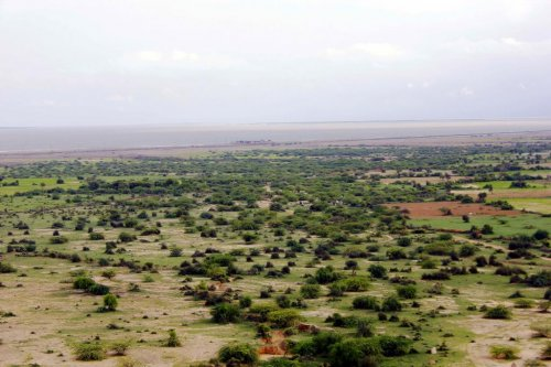 Rains bring new life and tourism to Thar Desert