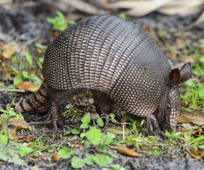 Texas man's bullet bounced off armadillo and hit him in the head