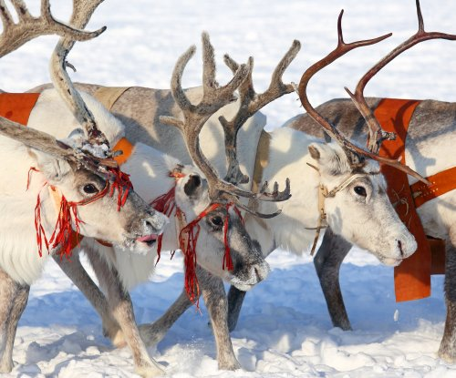 Anthrax outbreak in Arctic Circle kills 1, sickens 71; reindeer die en masse
