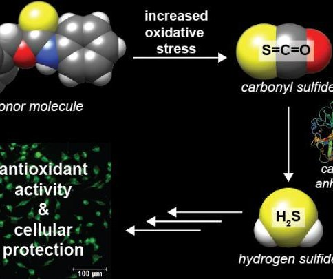 Scientists create new type of hydrogen sulfide donor molecules