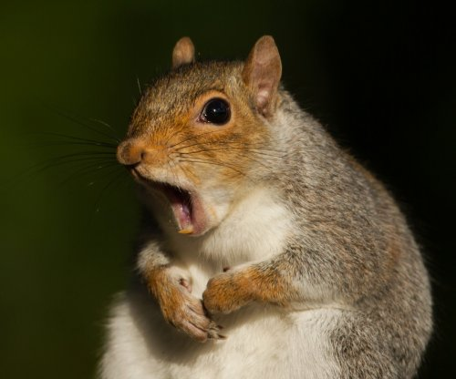 Wandering squirrel leaves 12,000 Canadians without power