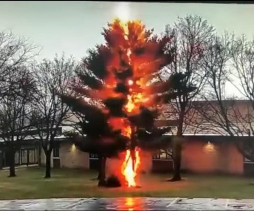 Lightning strike destroys tree outside Wisconsin high school