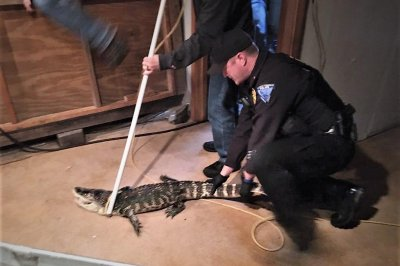 25-year-old alligator removed from Ohio home
