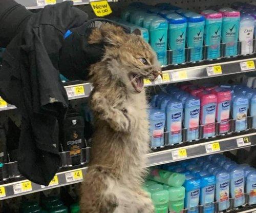 Bobcat wanders aisles of Dollar General store in Kentucky