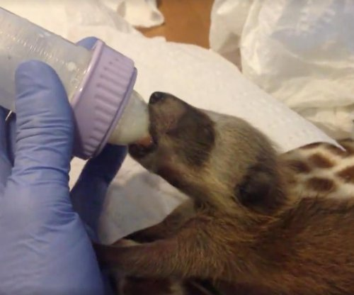 Oakland Zoo rescues raccoons accidentally transported from Florida