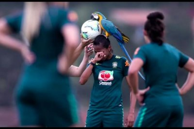 Watch: Parrot interrupts Brazilian soccer practice, lands on player's head