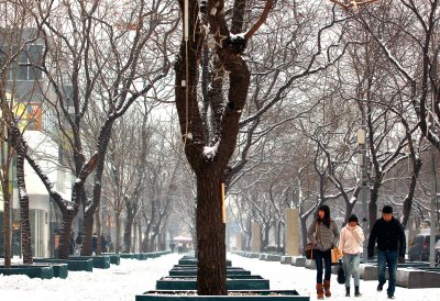 Streets could be illuminated by glow-in-the-dark trees