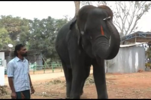 Musical elephant shows off harmonica skills in India
