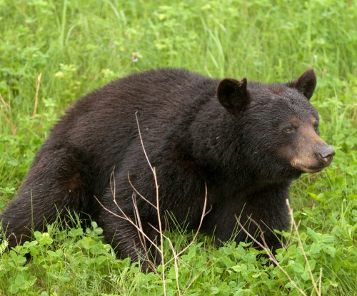 Canadian man punches bear in the face while defending dog