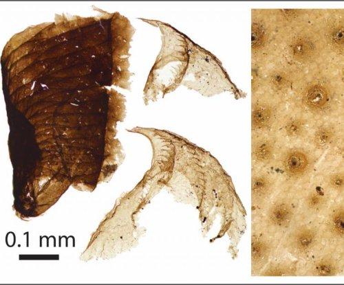 Half-billion-year-old microscopic animal fossils found in Greenland