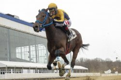 UPI Horse Racing Roundup: Dubai and Hong Kong races find international prospects