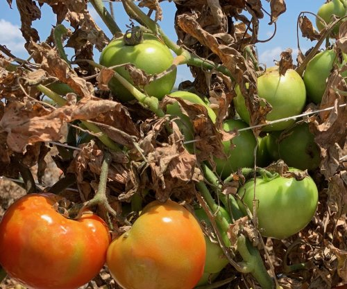 Farmers destroy crops grown for restaurants, hotels